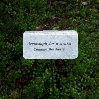 Bearberry Shrubs