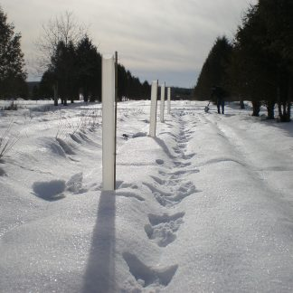 Tree Shelter Tube in Snow
