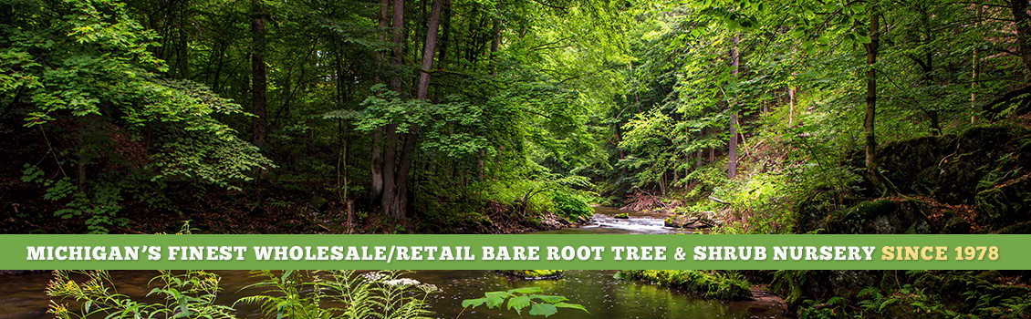 Bare Root Tree Nursery In Michigan